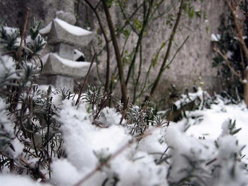 la lanterne sous la neige
