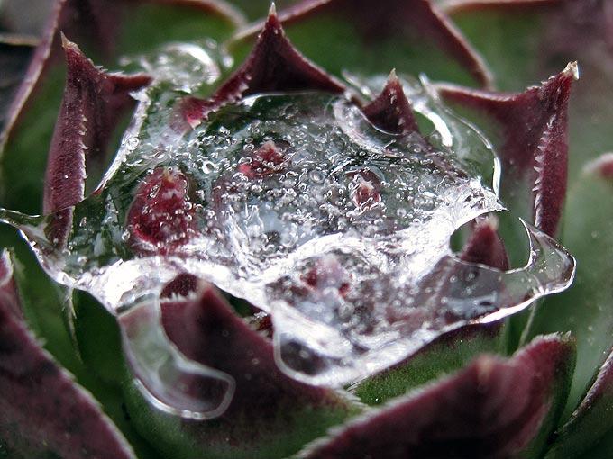 prise de glace