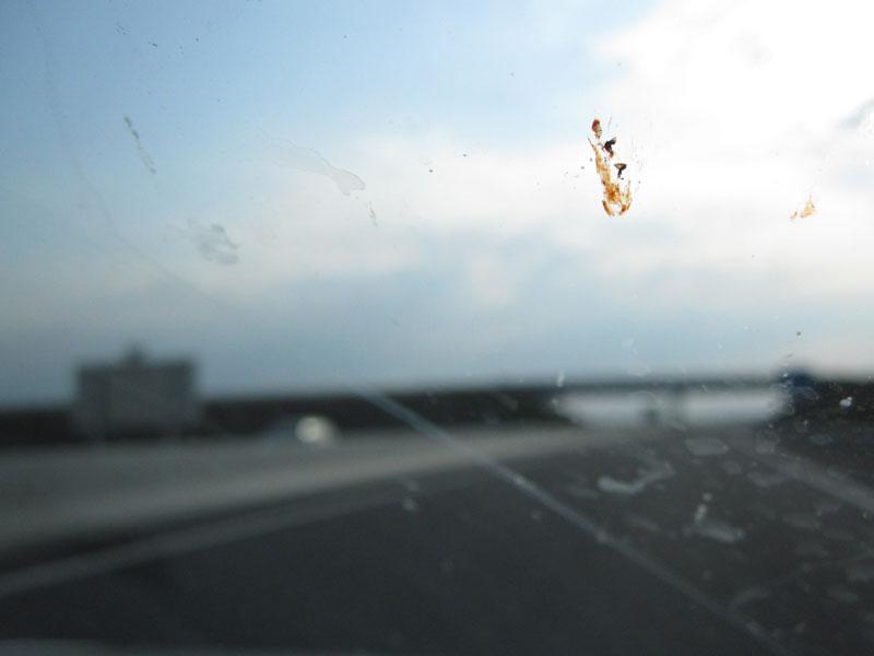 paf, le moustique !