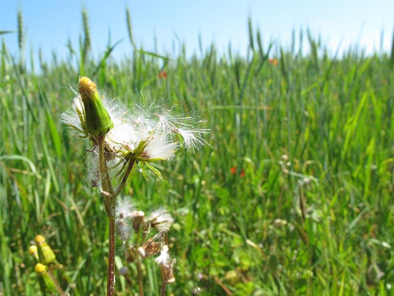 veille sur tes herbes indésirables