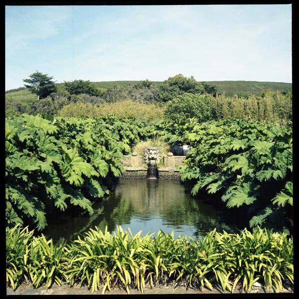le bassin des gunneras, jardin botanique de vauville