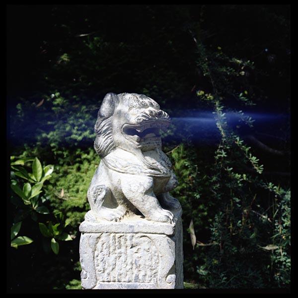 le souffle du dragon, jardin botanique de vauville