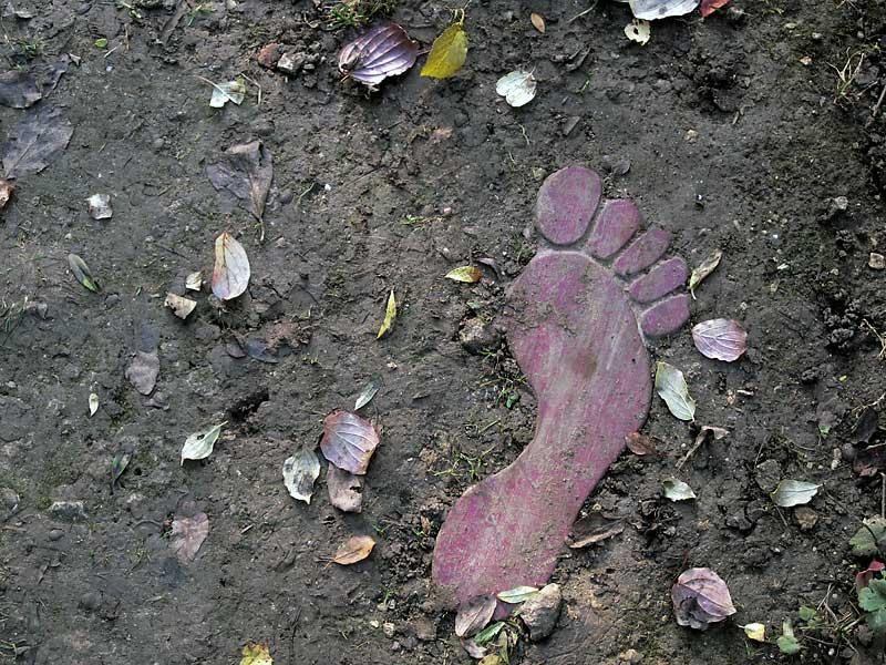 pied rose de terre