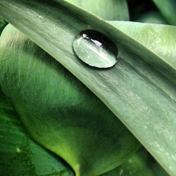 larme d'eau