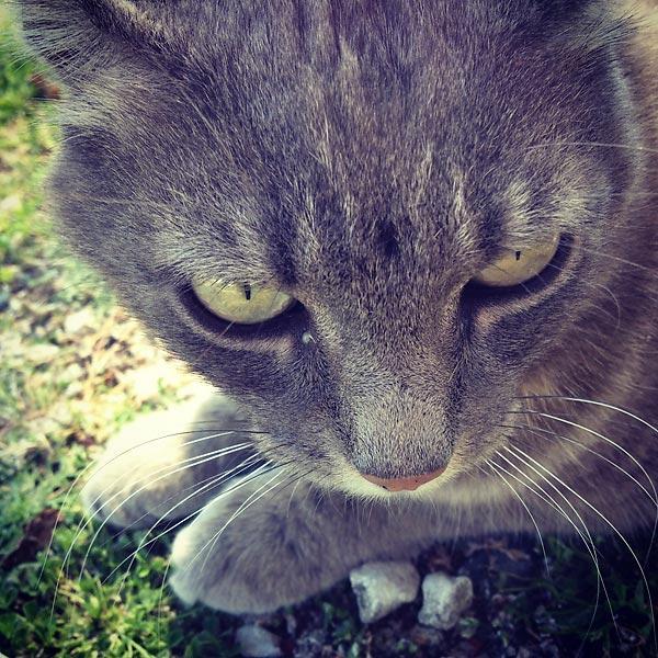le chat de ré