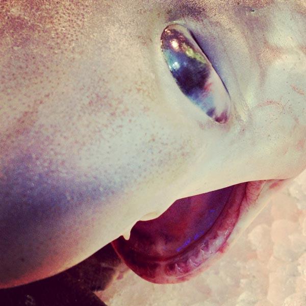 vendredi, c'est poisson