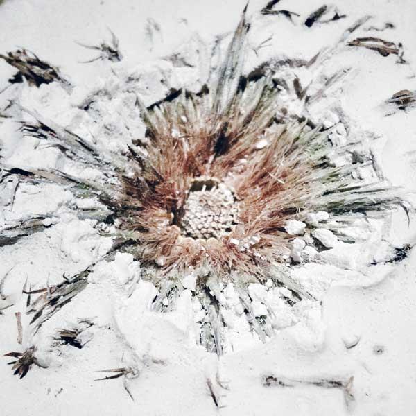 fleur séchée de plâtre