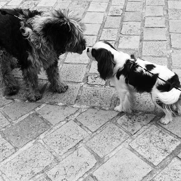 dogs bisous
