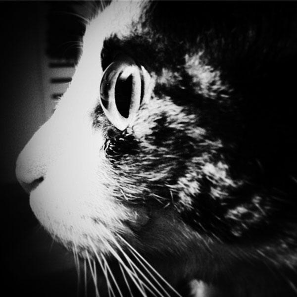violette, le chat paranormal