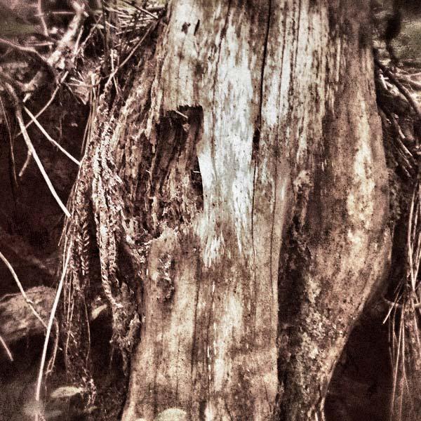 dans la forêt de montgoutoux