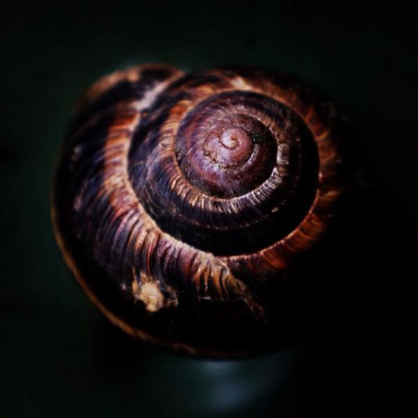 spiral d'escargot