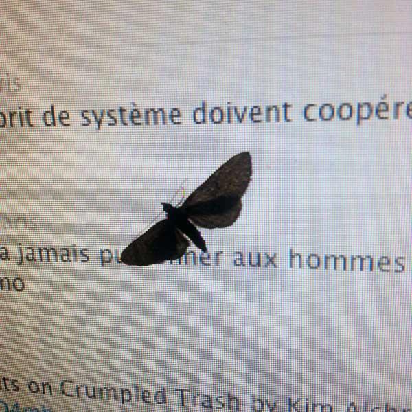 Papillon de nuit lisant un tweet d'edgar morin