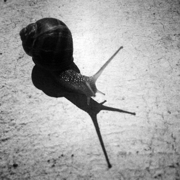 escargot du soir... espoir