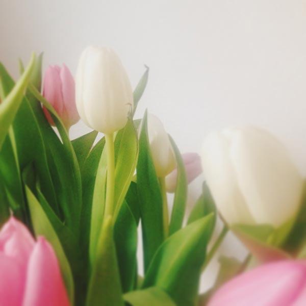 lundi en fleurs
