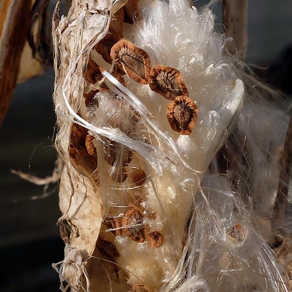 bouquet de graines