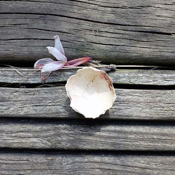 coquille d'oeuf sur bois