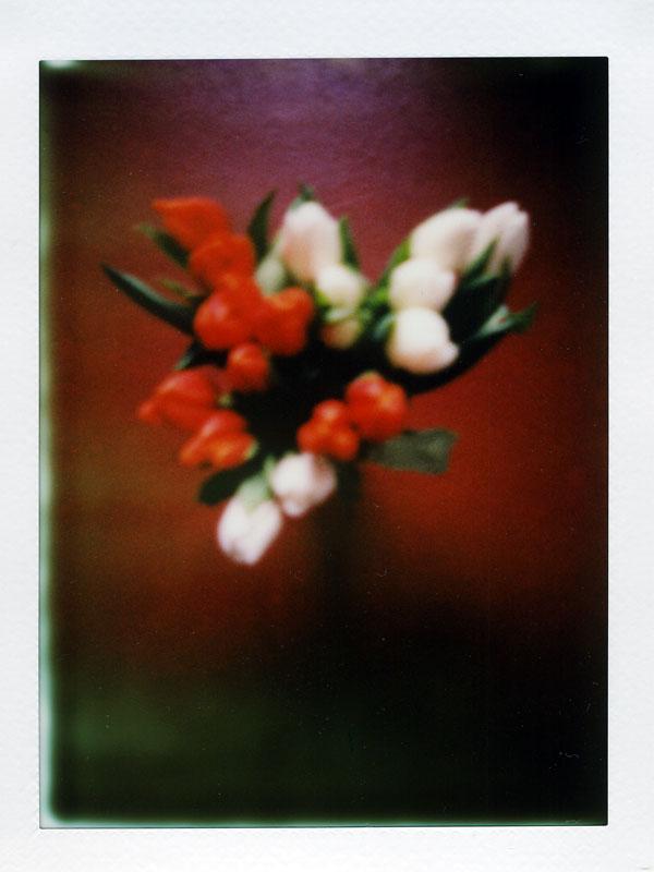 un dimanche en tulipes