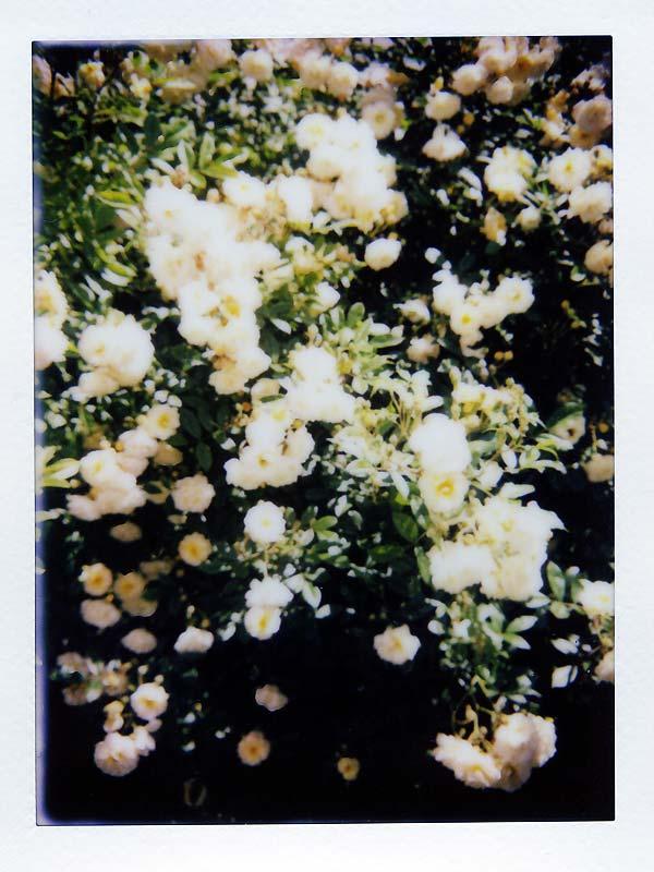 ghislaine de féligonde en fleurs
