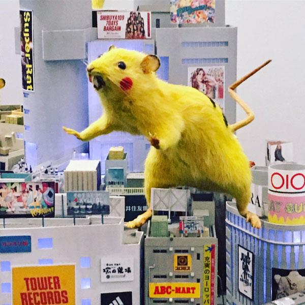super rat de chim pom